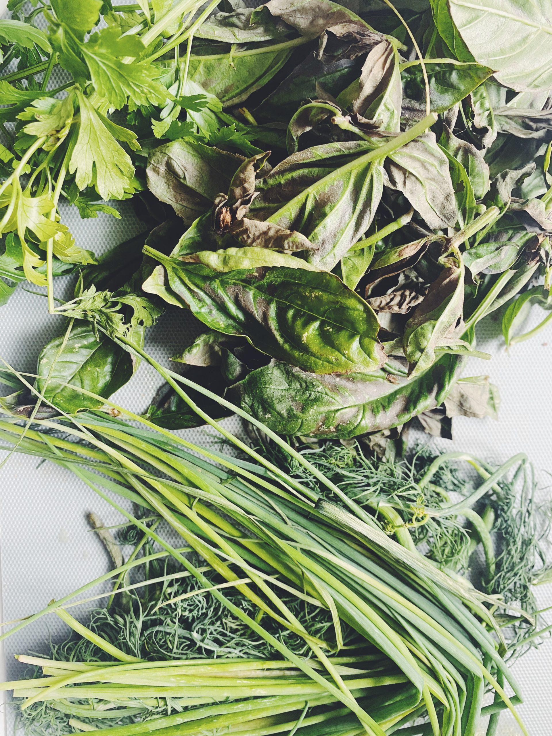 ZUPA Z RESZTEK ZIÓŁ - zioła różne, zero waste